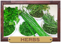 How to Grow Herbs | Medicinal and Culinary Herb Growing Guide
