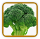 How to Grow Broccoli | Guide to Growing Broccoli