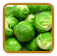 How to Grow Brussels | Guide to Growing Brussels