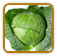 How to Grow Cabbage | Guide to Growing Cabbage