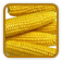 How to Grow Corn | Guide to Growing Corn