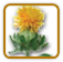 How to Grow Safflower | Guide to Growing Safflower