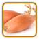 How to Grow Shallot | Guide to Growing Shallot
