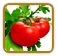 How to Grow Tomato | Guide to Growing Tomato