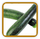 How to Grow Zucchini | Guide to Growing Zucchini